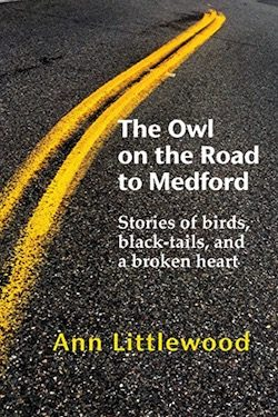 The Owl on the Road to Medford